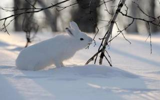 Проволока для петель на зайца